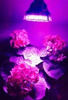 Kleine ufo par led licht groeien 54 w voor tuinbouw led groeien verlichting dropshipping