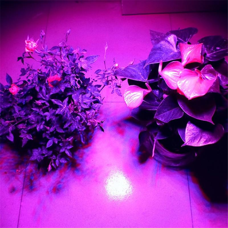 Levou Crescer Luzes w para planta e hidroponia Emitting Color : Red (620~630nm) & Red (650~660nm) & Blue (450~465nm)