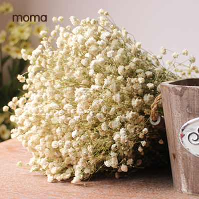Starry real flowers Dried Flower preservation groceries window display  wedding shoot dry naturally dried baby's breath-in Artificial & Dried  Flowers from ...