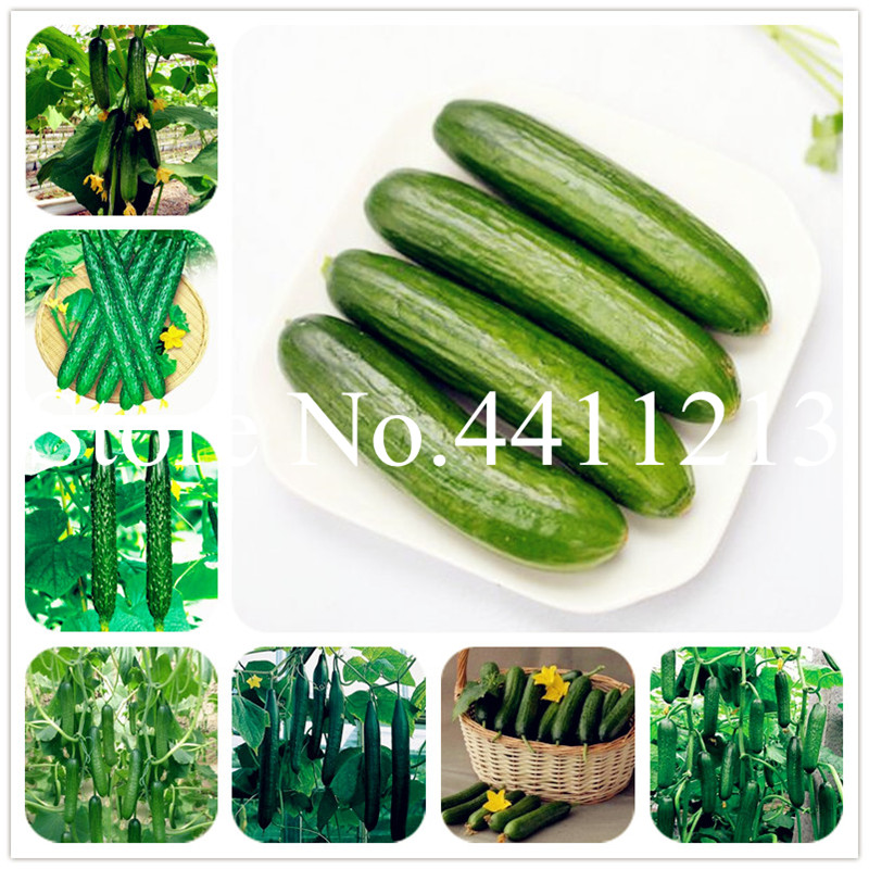 Cucumber 100 Pcs Japanese Mini Cucumber Vegetable For Home NO-GMO Vegetables For Home &garden Planting Easy To Grow