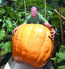 20Pcs Super Large Pumpkin Seeds Vegetable NON-GMO Edible DIY home garden bonsai Giant pumpkin seed gift for Halloween fun plants
