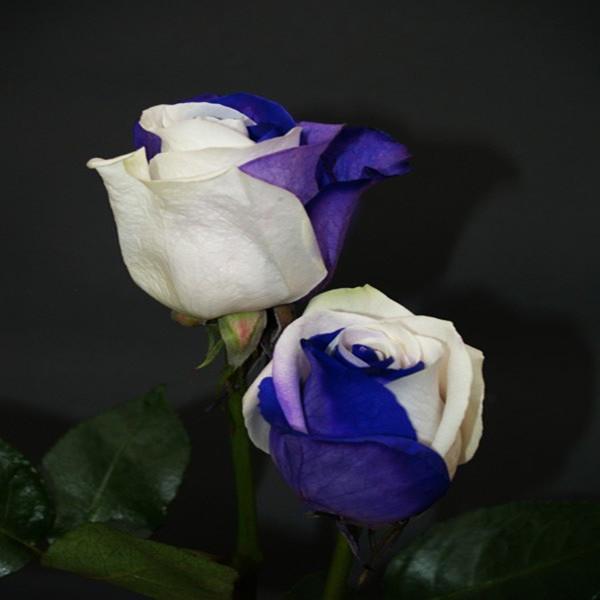 chine bleu rose-achetez des lots à petit prix chine bleu rose en