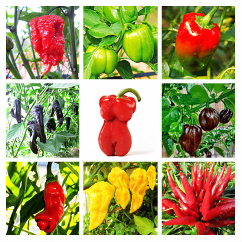 Promotion 100 pcs rare organic chili china vegetable farm pepper home  garden carolina reaper