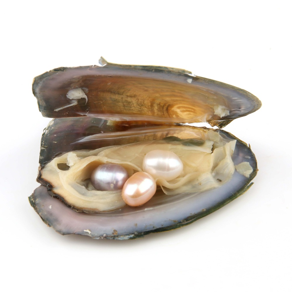 Oyster Pearl Birthday-Gifts Oval Freshwater 3-Color With 7-8-Mm DIY Vacuum-Packed