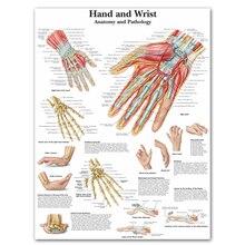 Анатомия руки наручные картины анатомические диаграммы плакаты Анатомия руки ноги холст печать настенные картины медицинское образование Офис Дом
