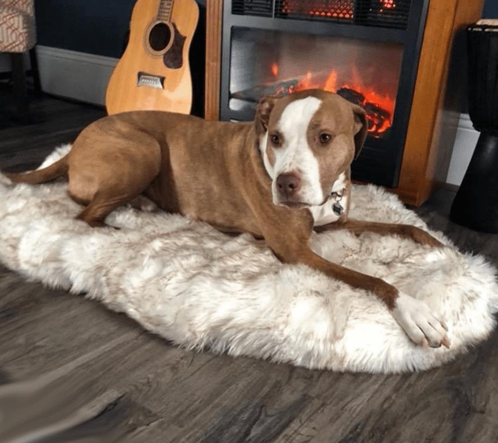 Tyteps Faux Fur Orthopedic Dog Bed