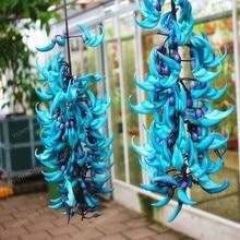 10 PCS Endangered Jade Vine Strongylodon Macrobotrys Flower Bonsai Perennial Blue