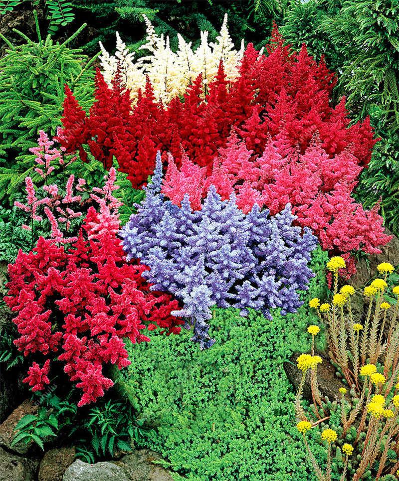 Лидер продаж! Смешанные 9 цветов Astilbe Chinensis карликовые деревья 100 шт. карликовые деревья фиолетовый красный белый синий розовый зеленый красочные многолетний сад