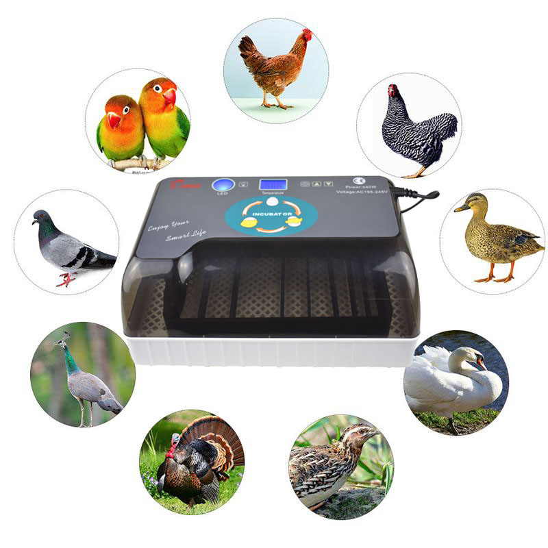 Automatic egg incubator automatic brooder Intelligent Digital Egg turning over incubators 12 eggs hatching For Chicken