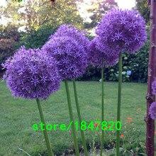 100 шт. Фиолетовый Гигантские Allium Giganteum Красивые Цветочные Семена Сад Растений Подарок бесплатная доставка