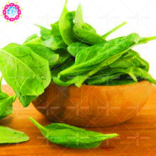 100 pcs/bag Spinach Seeds Salad Leaves And Good Taste Non-gmo Diy Home Garden Plant Sementes vegetable seeds