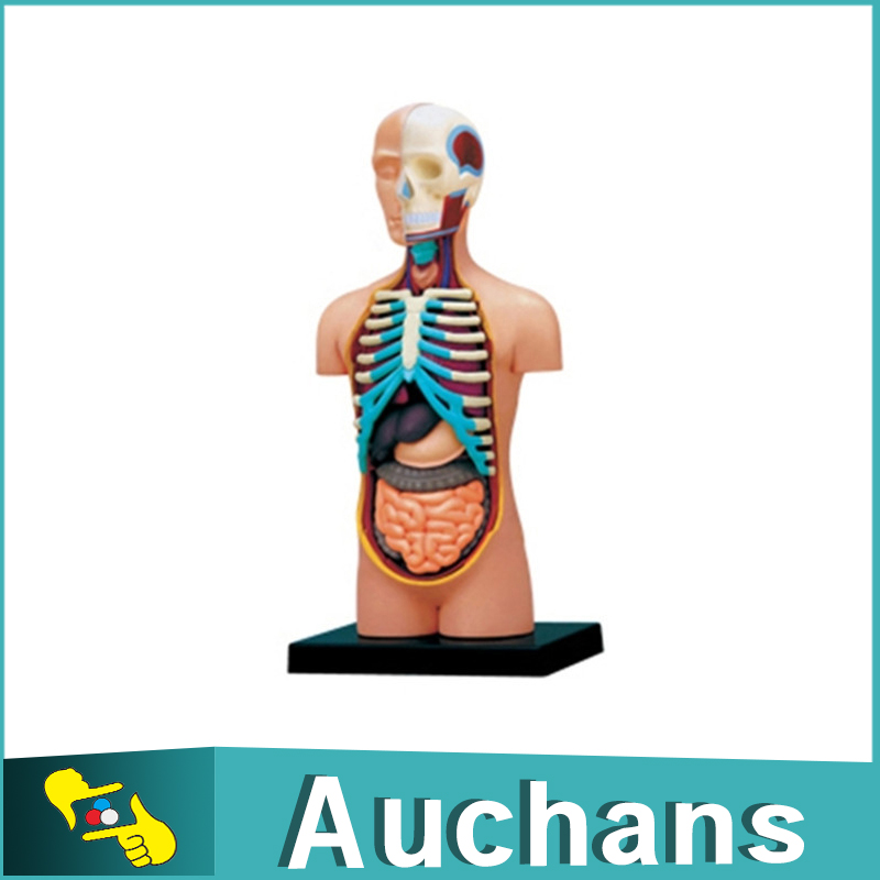 Berühmt Männlich Urogenitale Anatomie Galerie - Anatomie Ideen ...