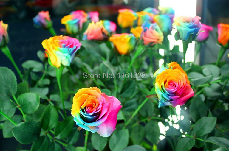 High Quality 400 Pcs Set Beautiful Flower Rainbow Rose Seed Multicolor Seeds Courtyard Plants Balcony Flowers In Bonsai From Home Garden On