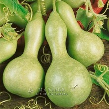 Marseed Space-saving 20 Gourd Vegetable Seeds Backyard Garden