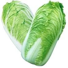 Китайская Капуста Бонсай Зеленый Овощной Бонсай Для Здорового Бонсай Питательных Зеленых Растений