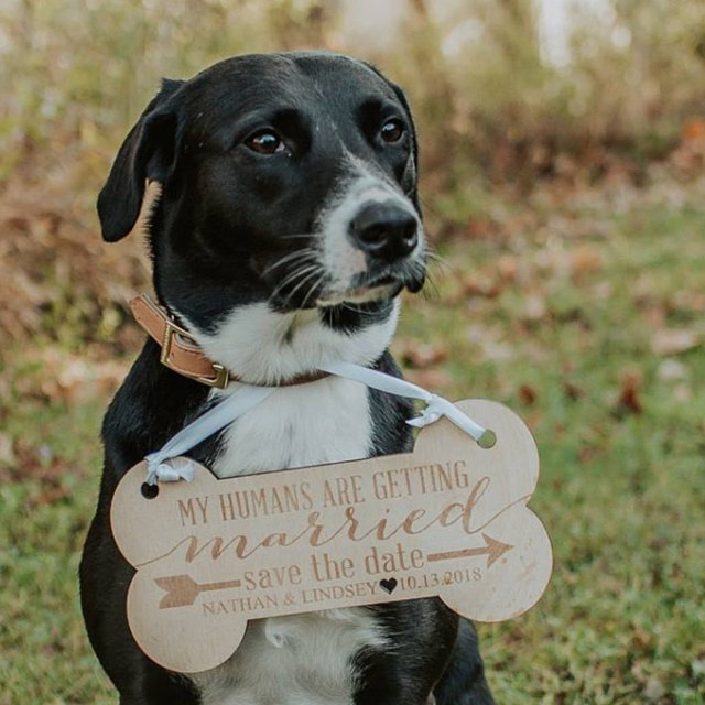 Dog Save the Date Sign for Wedding Pictures Personalized Wedding Sign Pet Sign for Engagement Save the Date Photography