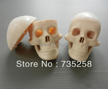 Miniature Plastic Skull ,Small skull model