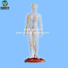 Acupuncture Human Body Model Female (In Chinese) 48CM BIX – Y1009 WBW433