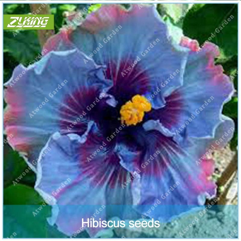 20Pcs Red Hibiscus Rose Flower Rare Seeds Flower Home Garden Decor