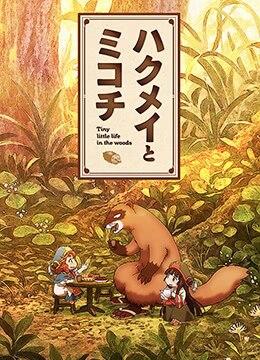 《妖精森林的小不点》2018年日本儿童,动画,奇幻动漫在线观看