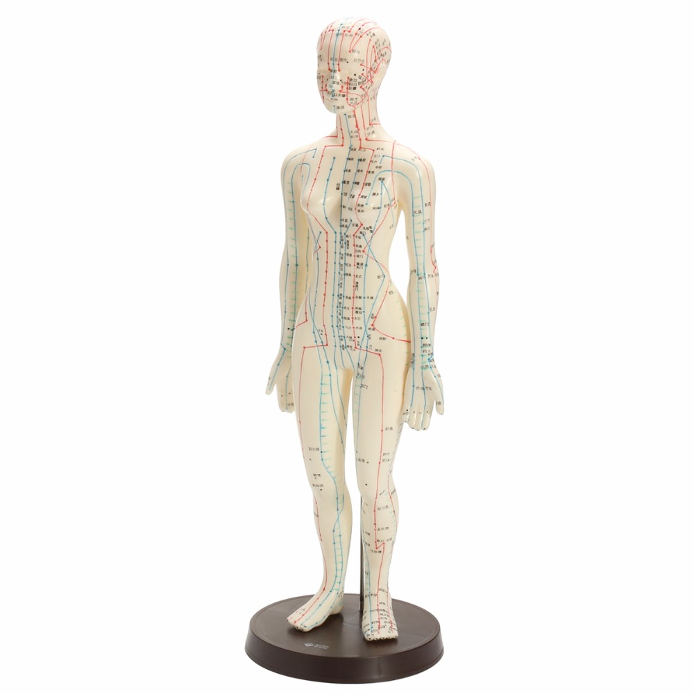 Human Body Acupuncture Model Female Meridians Model Chart Book Base 48cmHuman Body Acupuncture Model Female Meridians Model Chart Book Base 48cm