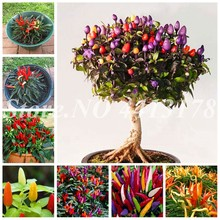 200 pcs/ bag Giant Spices Spicy Red Chili Hot Pepper Exotic Potted Bonsai Garden Plant for Flower Pot Planters Easy to Grow(China)