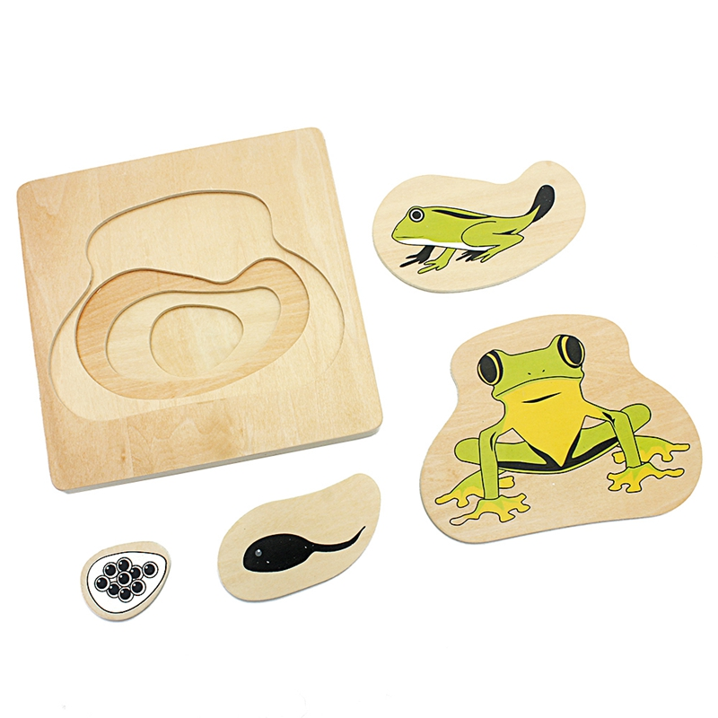 Niños Montessori enseñanza SIDA niño ciclo de vida de la rana rompecabezas multicapa crecer rompecabezas preescolar niños bebés Juguetes