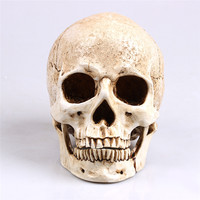 Arts Crafts White Head Human Skull Model Replica Medical Realistic Lifesize 1:1 Emulate Resin Crafts Skull For Decorative