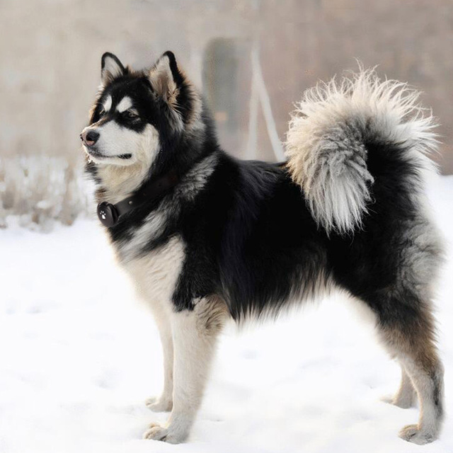 2G Dog GPS Tracking Pet Finder Collar Safety Location