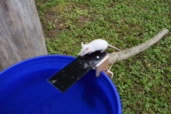 Walk The Plank Mouse Trap Repellent Kill Or No Kill Trap For Rats Rodent Mice Repeller Non Poison Dunk The Rat Mouse Trap