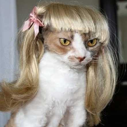 [mpk Store] Blond Cat Wig, Pet Wig, Funny Cat Wig