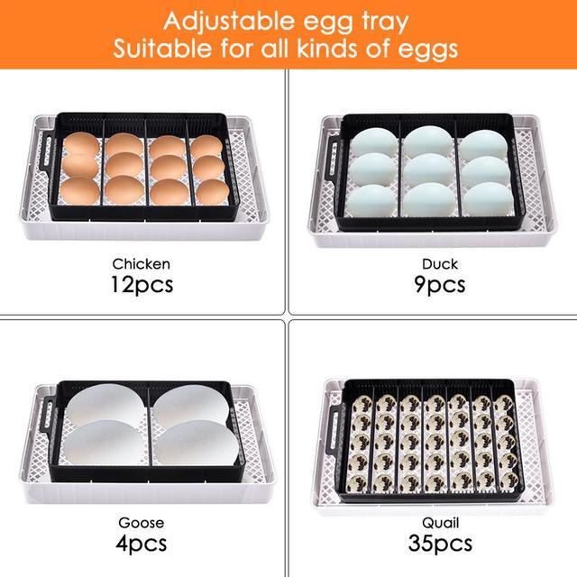 Digital Egg incubator,  Hatcher - Large 12 eggs incubators For Chicken Duck Poultry Quail Eggs 4