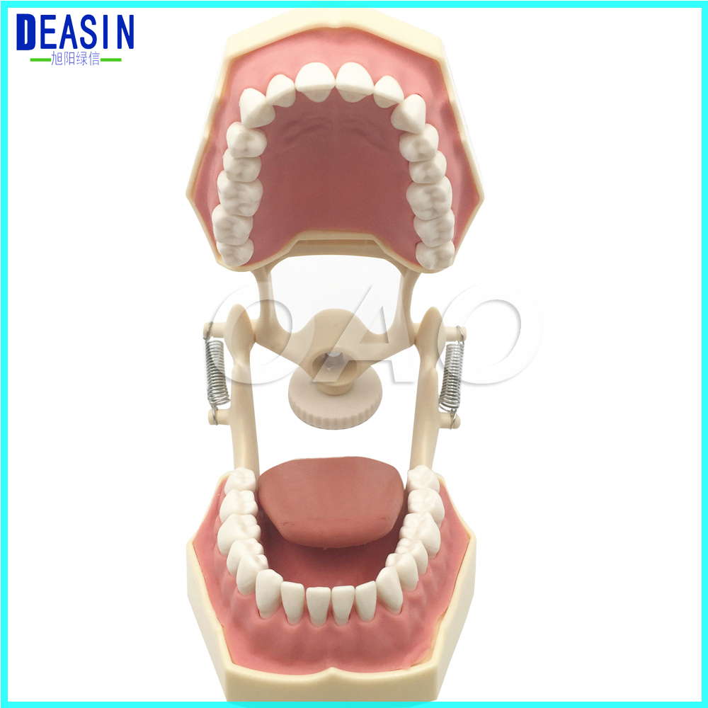 Free shipping Dental Soft Gum Teeth Model with tougne Typodont  w/ 32 Removable Teeth NISSIN 200 Compatible 2016 dental orthodontics typodont teeth model half metal half ceramic brace typodont with arch wire