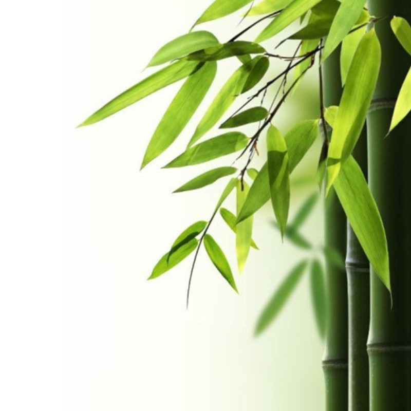Compare Prices On Bamboo Print Shower Curtain Online