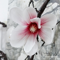 185 cm uzun 3D büyük yapay açelyalar manolya beyaz guguk uzun kök keyfi bükme yeni İpek çiçek vine 6 adet/grup