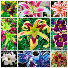100 pcs  lily Plants indoor bonsai calla lily seeds beautiful garden lily flower seeds free shipping
