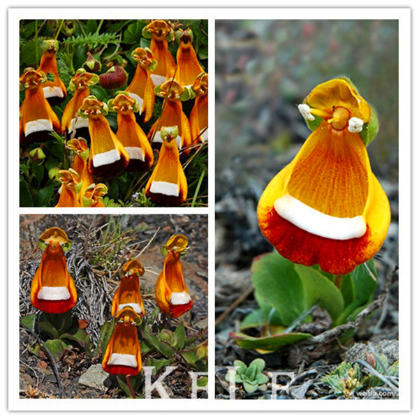 Ex ticas plantas com flores vender por atacado ex ticas for Plantas exoticas online