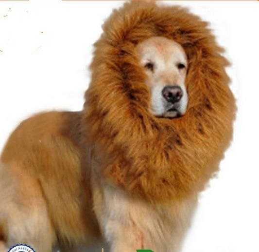 Golden Collar Dog Grooming