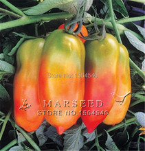 100 seeds / pack,  classic San Marzano shape – Tiren (F1) Tomato Seeds Conventional & Organic fruit vegetables seeds