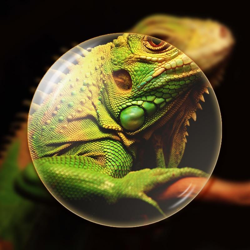 XINZE 1.56 Φωτοχρωματικές Ενιαίες Όψεις - Αξεσουάρ ένδυσης - Φωτογραφία 2