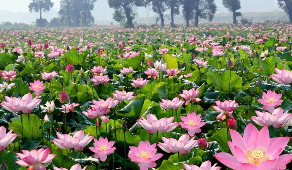 Addis dise/ño de Flores Pinzas de la Ropa Bolsa de Transporte con Ganchos Verde