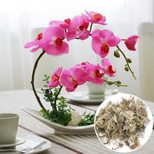 Orquídeas decorativas esphagnum secas Phalaenopsis sustrato de cultivo sin suelo 12L paquete comprimido flores Accesorios
