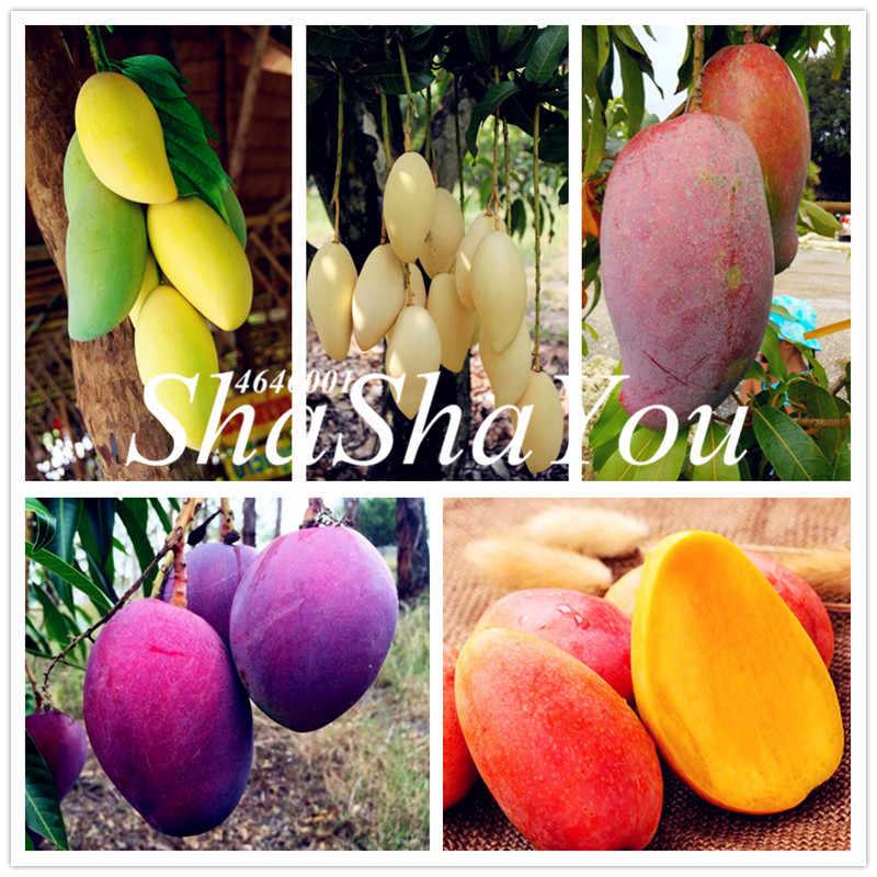 1 Pcs Bag Mango Plant Gaint Mango Tree Tropical Bonsai Organic Home Garden Fruits Vegetables Pot Plant For Flower Pot Planters