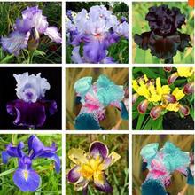 Горячая Продажа 100 Розовый Iris Семена Популярные Многолетнее Сад Цветок Великолепный Вырезать Семена цветов Бонсай Семена