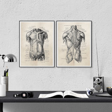 Human Anatomy Canvas Art Prints And Poster, Retro Anatomy Poster Canvas Painting Wall Art Picture Medical Doctor Clinic Decor(China)