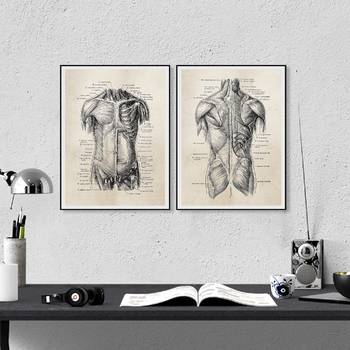 Human Anatomy Canvas Art Prints And Poster, Retro Anatomy Poster Canvas Painting Wall Art Picture Medical Doctor Clinic Decor