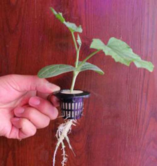 Grau alimentício, Plantio Hidropônico Plástico Rede de Malha Cesta Vaso de Flores Planta Crescer Copo, Vários tamanhos