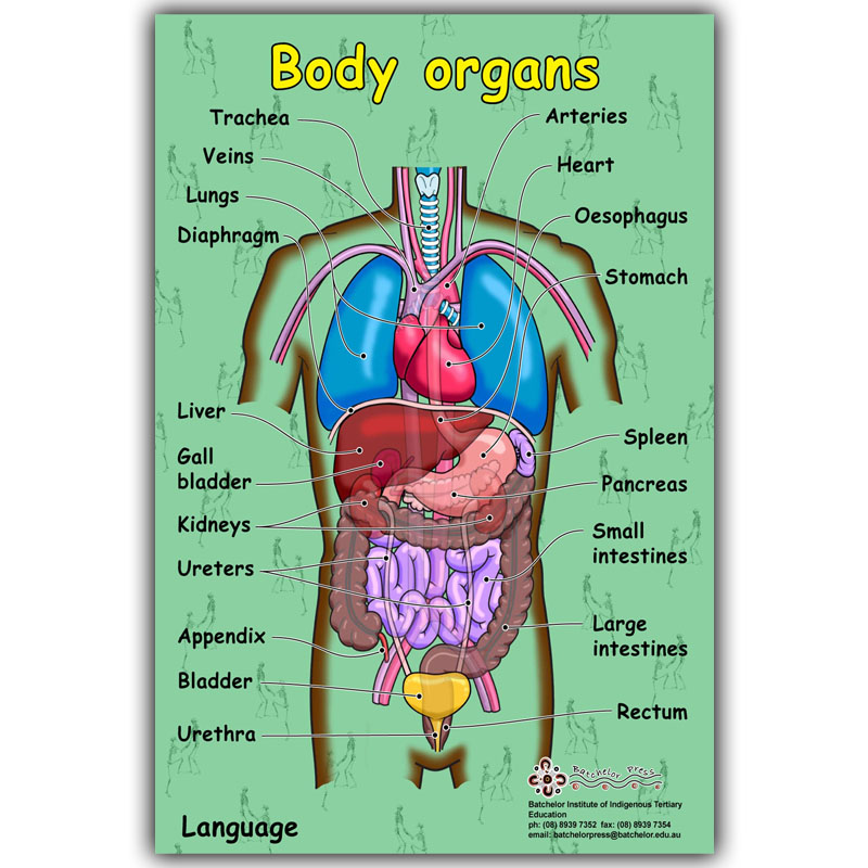 science knowledge body human organs medical poster silk decorated printing hospital custom