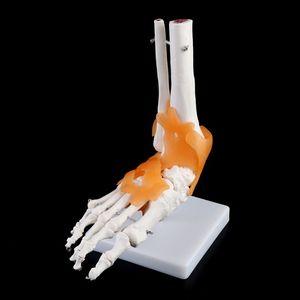 Image 4 - 1: 1 Scheletro Umano Modello Umano Giunto Medico Anatomia Legamenti Della Caviglia Anatomicamente Insegnamento Delle Risorse Strumento