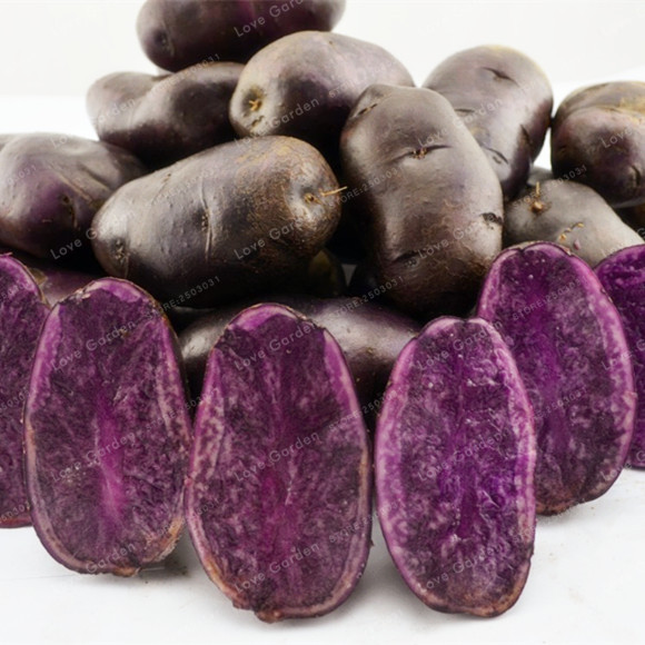 100 Pcs Purple Potato Bonsai Purple Sweet Potato Delicious Nutrition Green Vegetable Bonsai Home Garden NO